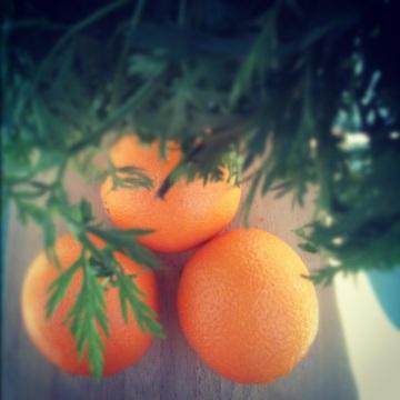 oranges (www.casitabythesea.com)